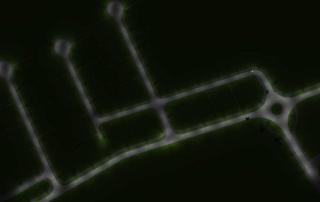 Prisma Tibro, Sweden | Prisma Eliott | LED gatubelysning
