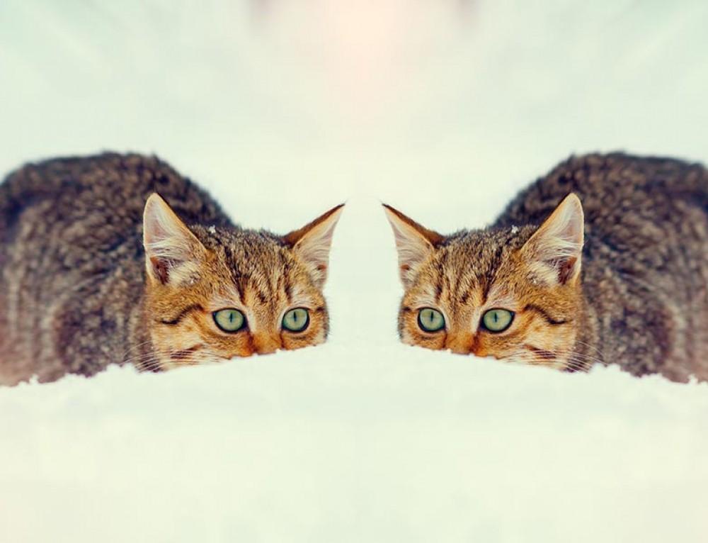 Dubbla reläer